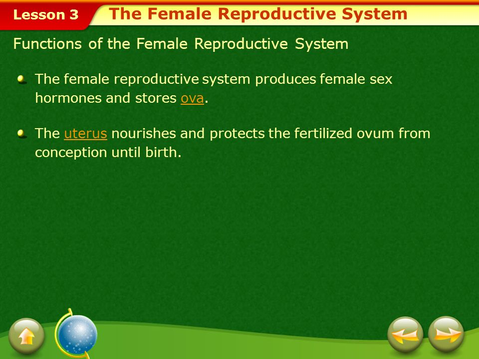 Lesson 3 At birth a females ovaries contain more than 400,000 immature ova, or eggs.ovaries During ovulation, the right ovary will release a mature ovum one month, and the left ovary will release one the next month.ovulation Structure of the Female Reproductive System Ovulation is the process of releasing a mature ovum into the fallopian tube each month.