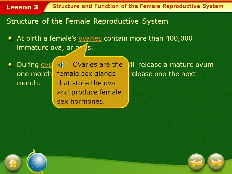 Lesson 3 The female reproductive system produces female sex hormones and stores ova.ova The uterus nourishes and protects the fertilized ovum from con