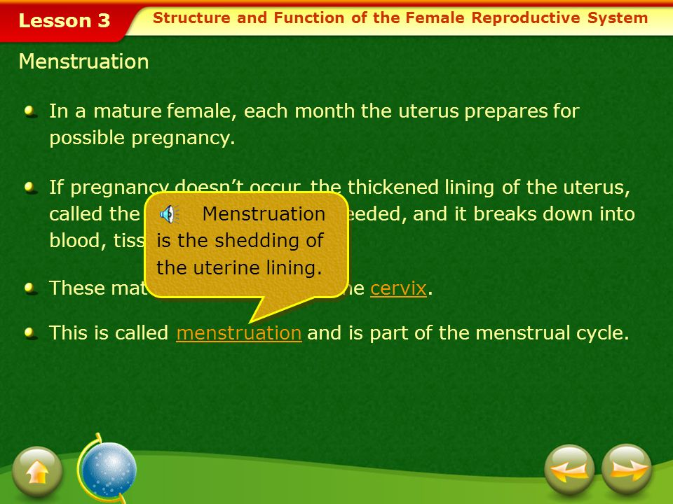 Lesson 3 In a mature female, each month the uterus prepares for possible pregnancy. If pregnancy doesnt occur, the thickened lining of the uterus, cal