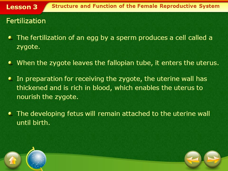 Lesson 3 Relate the importance of early detection and warning signs for problems of the female reproductive system.