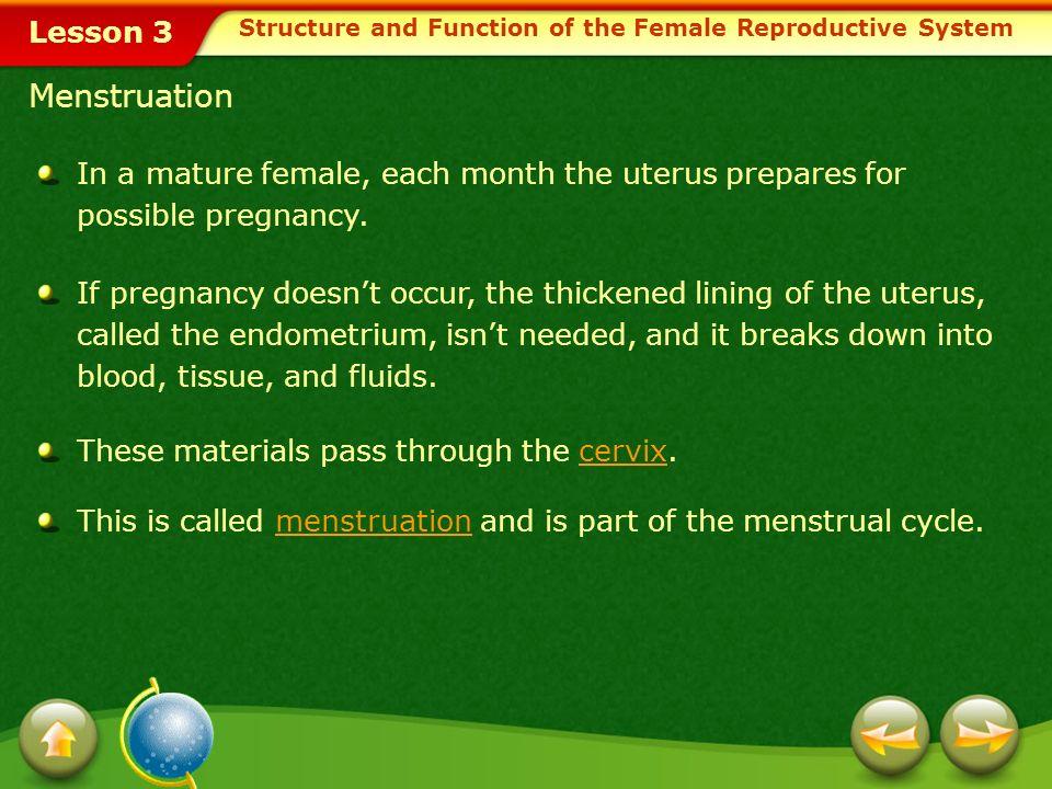 Lesson 3 Menstruation In a mature female, each month the uterus prepares for possible pregnancy.