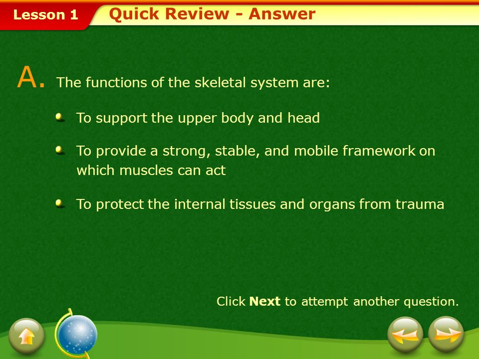 Lesson 1 Quick Review Provide a short answer to the question given below. Click Next to view the answer. Q. What are the functions of the skeletal sys