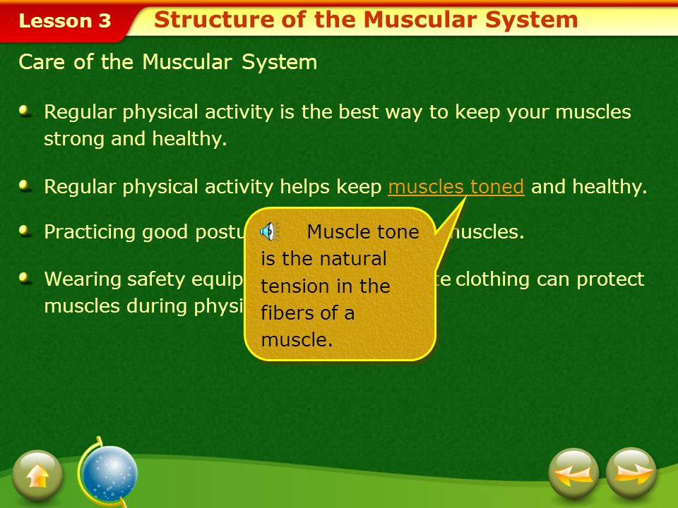 Lesson 3 Smooth Muscles Skeletal Muscles Cardiac Muscles The involuntary cardiac muscles are responsible for the contraction of your heart.cardiac mus