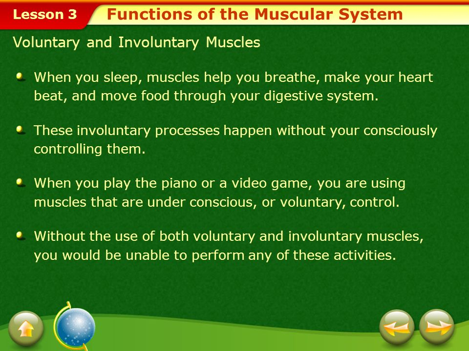 Lesson 3 Explain the functions of the muscular system. Describe the different types of muscles in the body. Examine the effects of health behaviors on