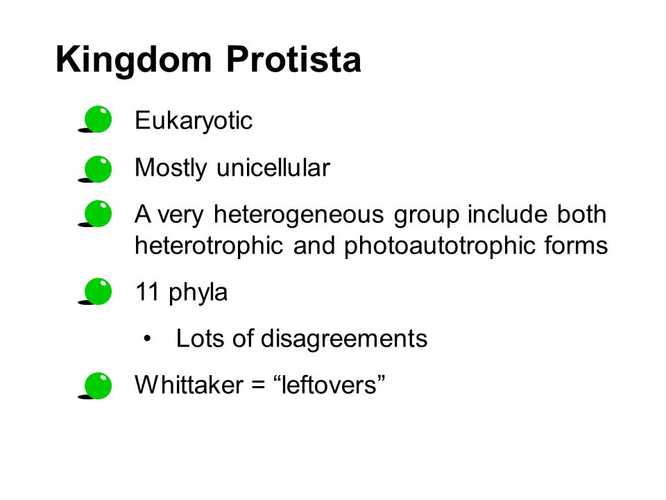 Kingdom Protista Eukaryotic Mostly unicellular A very heterogeneous group include both heterotrophic and photoautotrophic forms 11 phyla Lots of disag