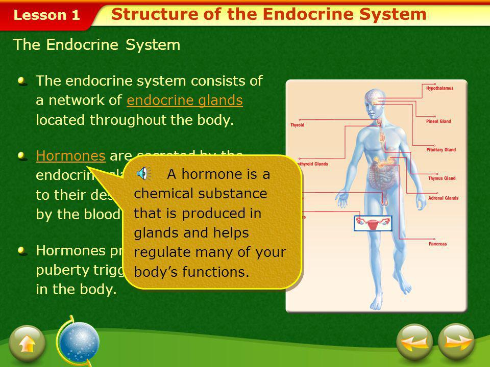 Lesson 1 The endocrine system consists of a network of endocrine glands located throughout the body.endocrine glands HormonesHormones are secreted by