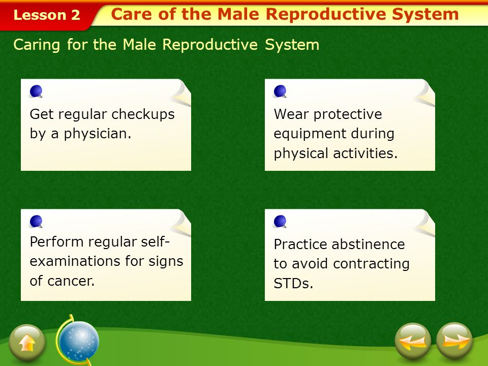 Lesson 2 Male Reproductive System Structure and Function of the Male Reproductive System
