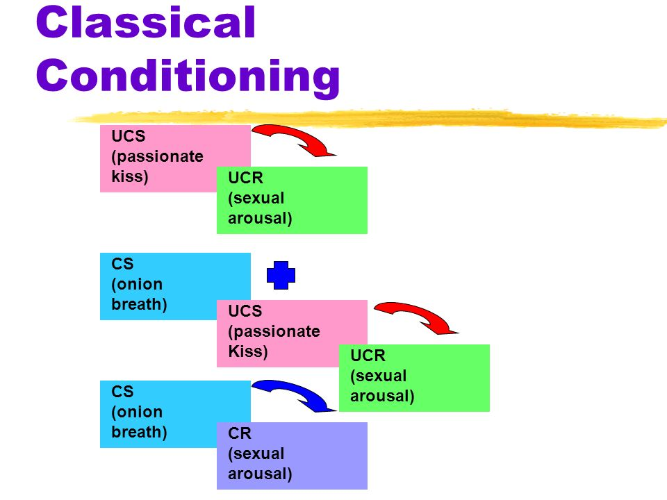 Classical Conditioning UCS (passionate kiss) UCR (sexual arousal) CS (onion breath) CS (onion breath) CR (sexual arousal) UCS (passionate Kiss) UCR (s