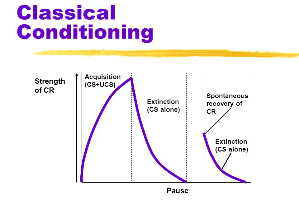 Classical Conditioning Strength of CR Pause Acquisition (CS+UCS) Extinction (CS alone) Extinction (CS alone) Spontaneous recovery of CR