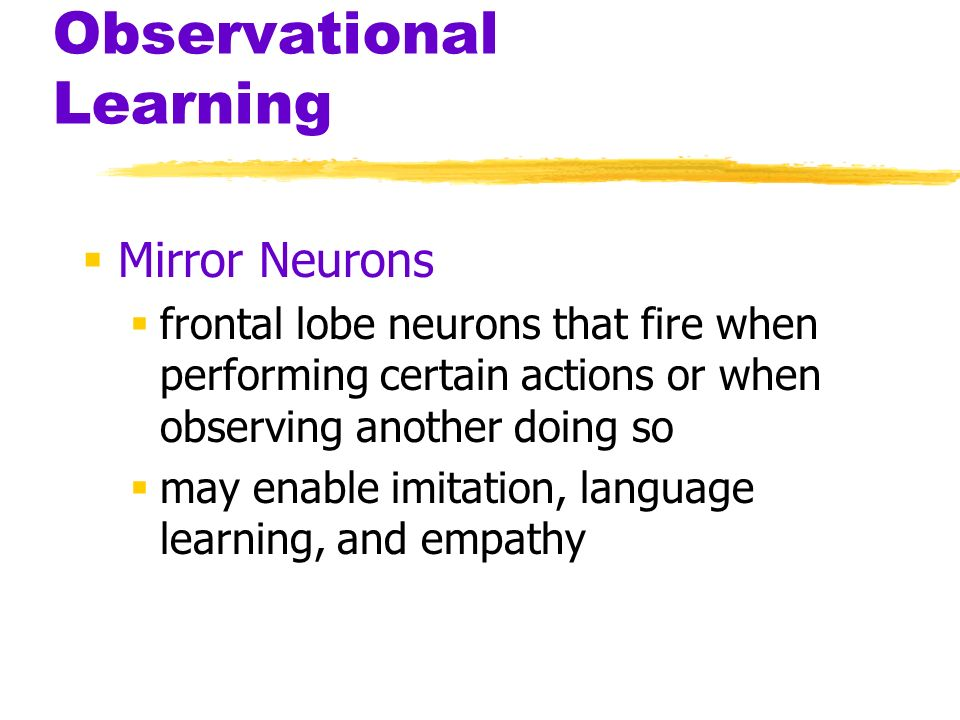 Observational Learning Mirror Neurons frontal lobe neurons that fire when performing certain actions or when observing another doing so may enable imi