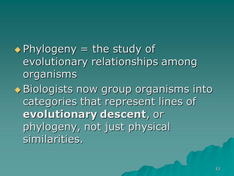 13 Phylogeny = the study of evolutionary relationships among organisms Phylogeny = the study of evolutionary relationships among organisms Biologists