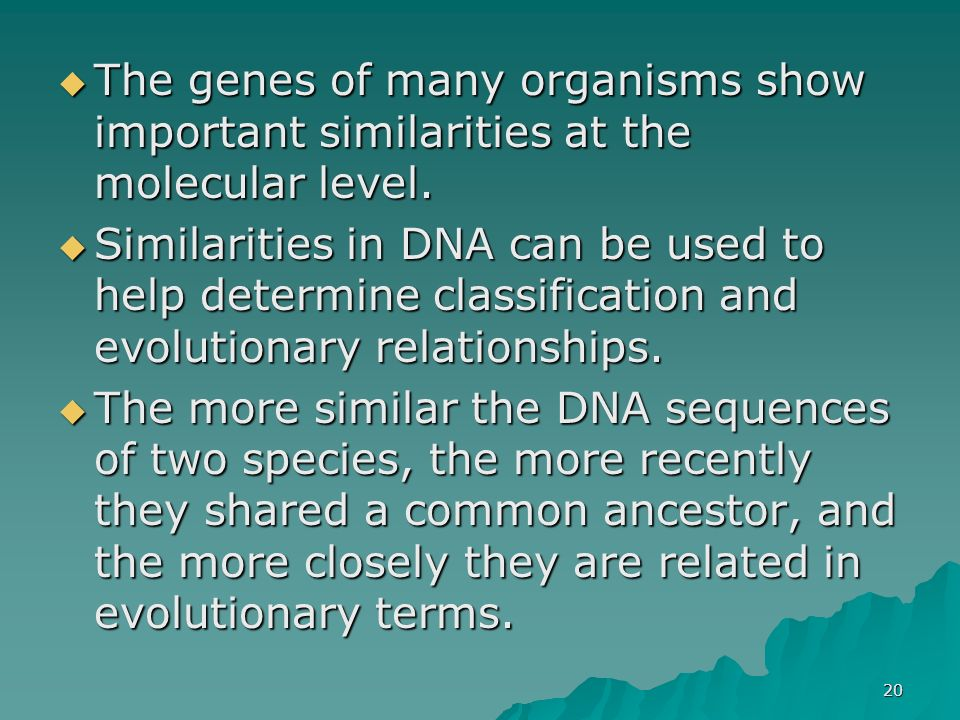 20 The genes of many organisms show important similarities at the molecular level. The genes of many organisms show important similarities at the mole