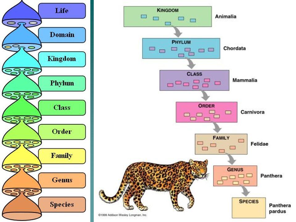 10 Ursus arctos (Grizzly Bear) Kingdom – Animalia Kingdom – Animalia Phylum – Chordata Phylum – Chordata Class – Mammalia Class – Mammalia Order – Carnivora Order – Carnivora Family –Ursidae Family –Ursidae Genus –Ursus Genus –Ursus species - arctos species - arctos