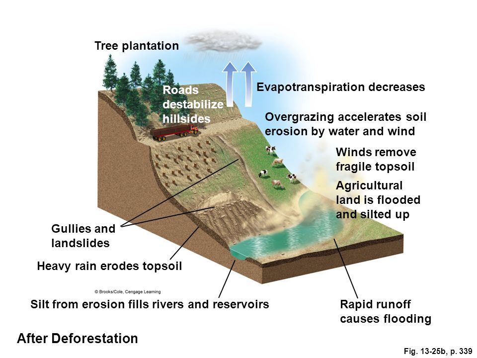 Fig. 13-25b, p. 339 Tree plantation Roads destabilize hillsides Evapotranspiration decreases Overgrazing accelerates soil erosion by water and wind Wi