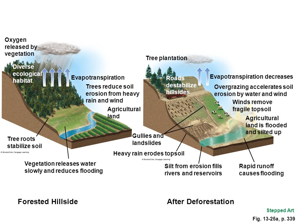 Fig. 13-25a, p. 339 Oxygen released by vegetation Diverse ecological habitat Evapotranspiration Trees reduce soil erosion from heavy rain and wind Tre