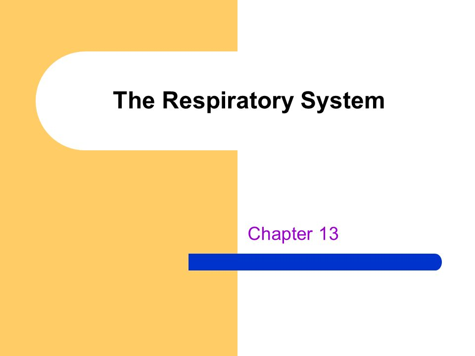 The Respiratory System Chapter 13
