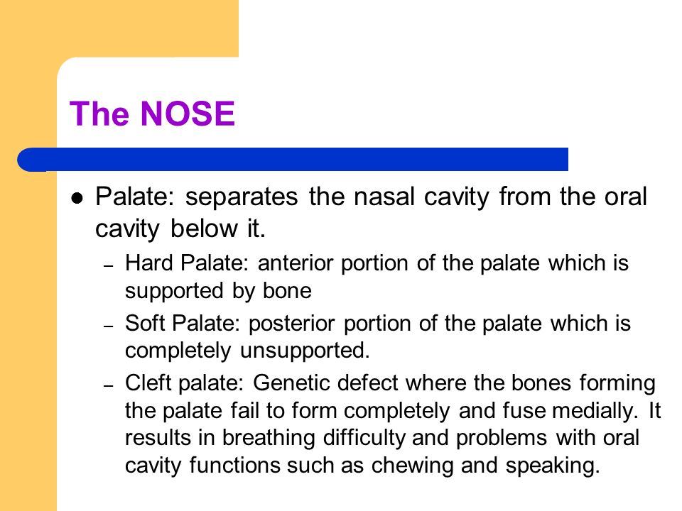 The NOSE Palate: separates the nasal cavity from the oral cavity below it. – Hard Palate: anterior portion of the palate which is supported by bone –
