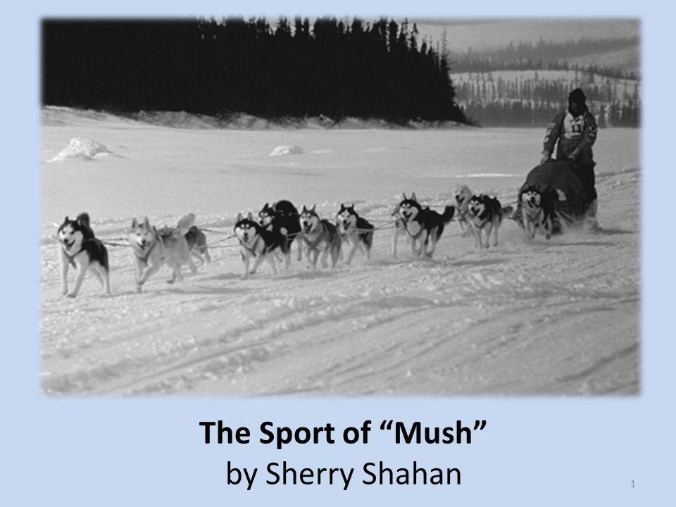 The Sport of Mush by Sherry Shahan 1