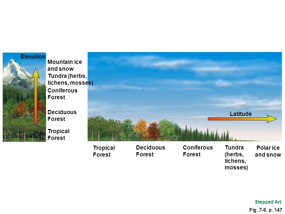 Latitude Tropical Forest Deciduous Forest Coniferous Forest Tundra (herbs, lichens, mosses) Polar ice and snow Fig.