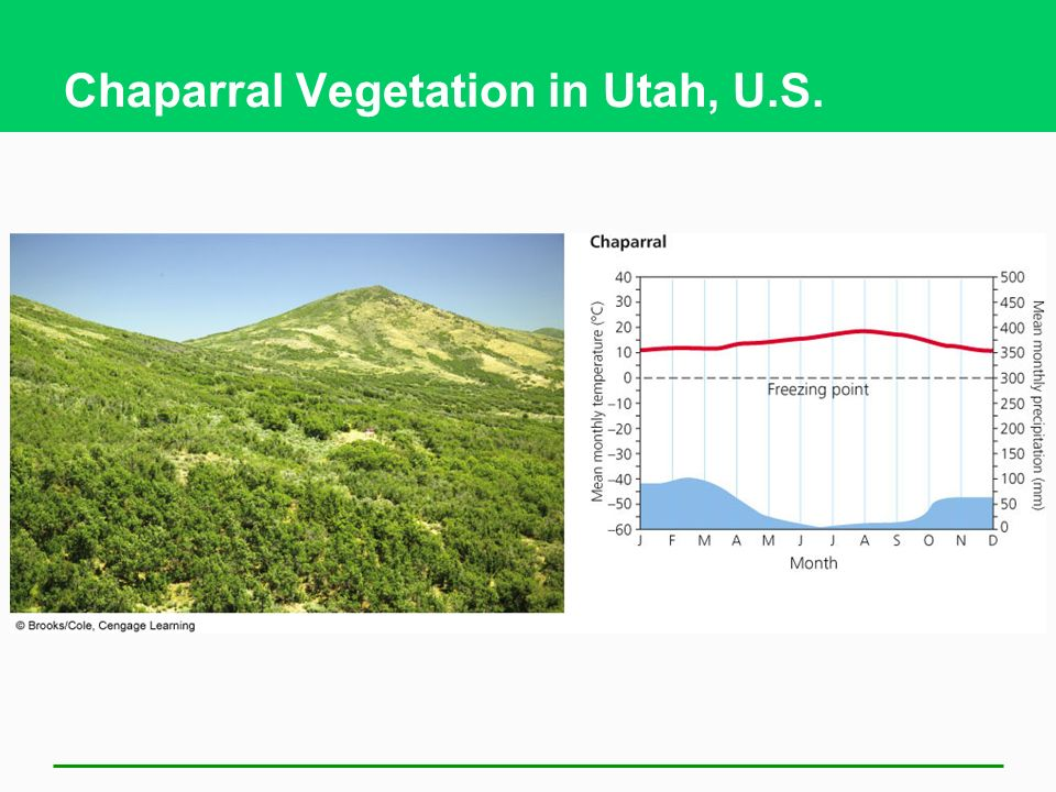 Chaparral Vegetation in Utah, U.S.
