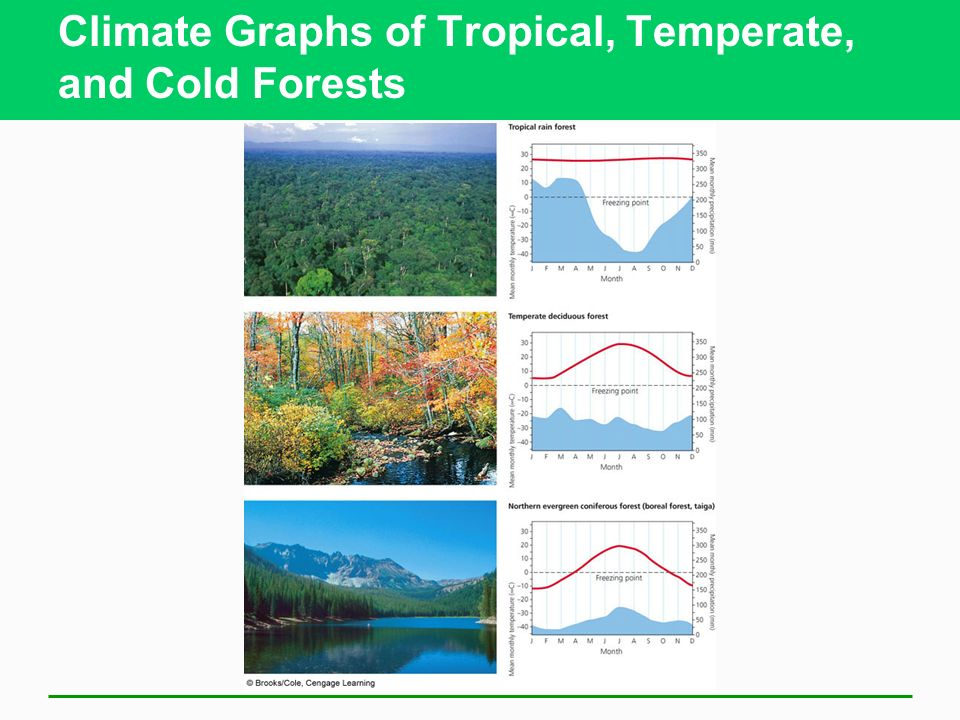Climate Graphs of Tropical, Temperate, and Cold Forests