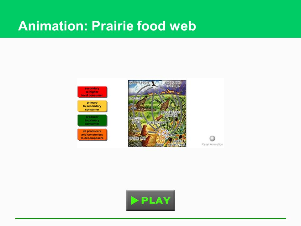 Animation: Prairie food web