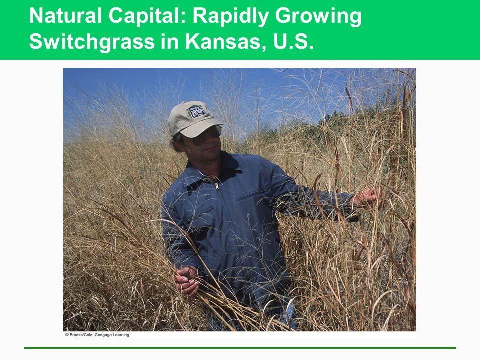 Natural Capital: Rapidly Growing Switchgrass in Kansas, U.S.