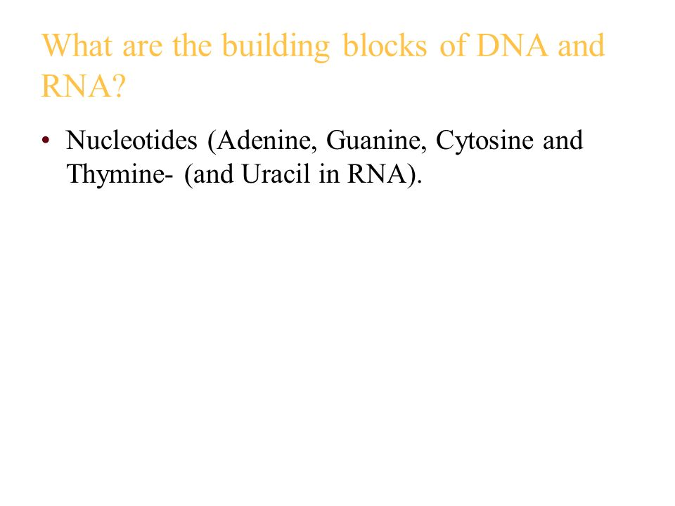 What are the building blocks of DNA and RNA? Nucleotides (Adenine, Guanine, Cytosine and Thymine- (and Uracil in RNA).