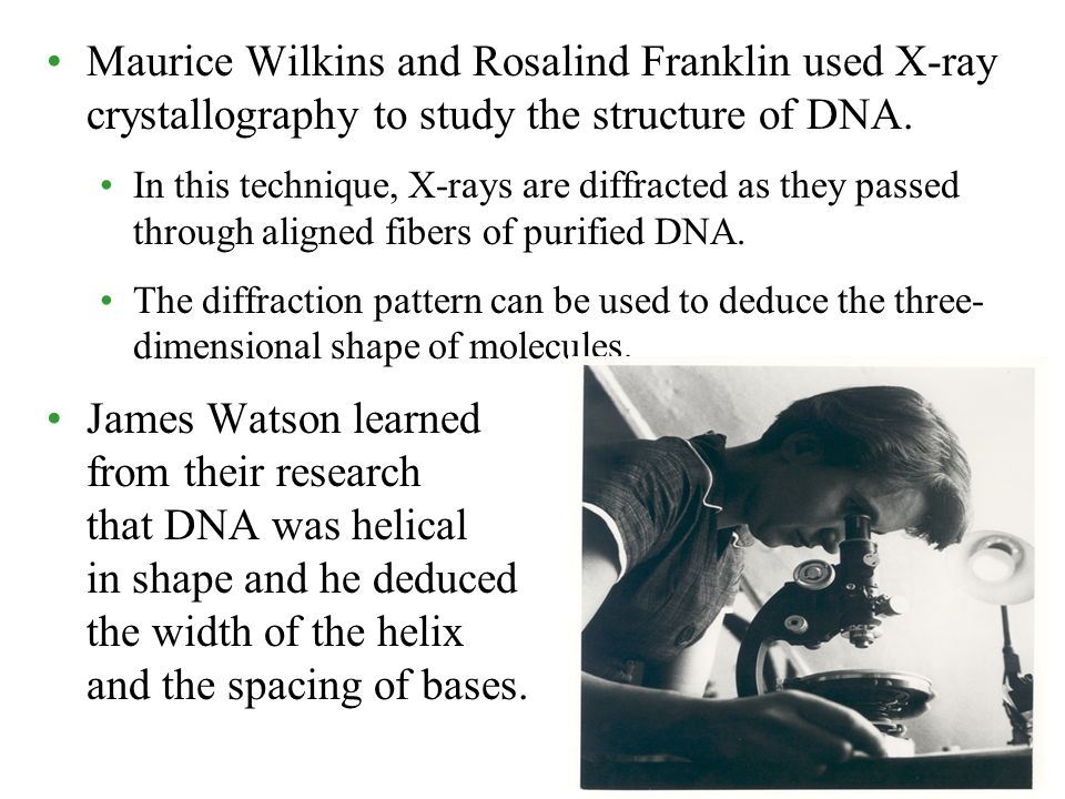 Maurice Wilkins and Rosalind Franklin used X-ray crystallography to study the structure of DNA. In this technique, X-rays are diffracted as they passe