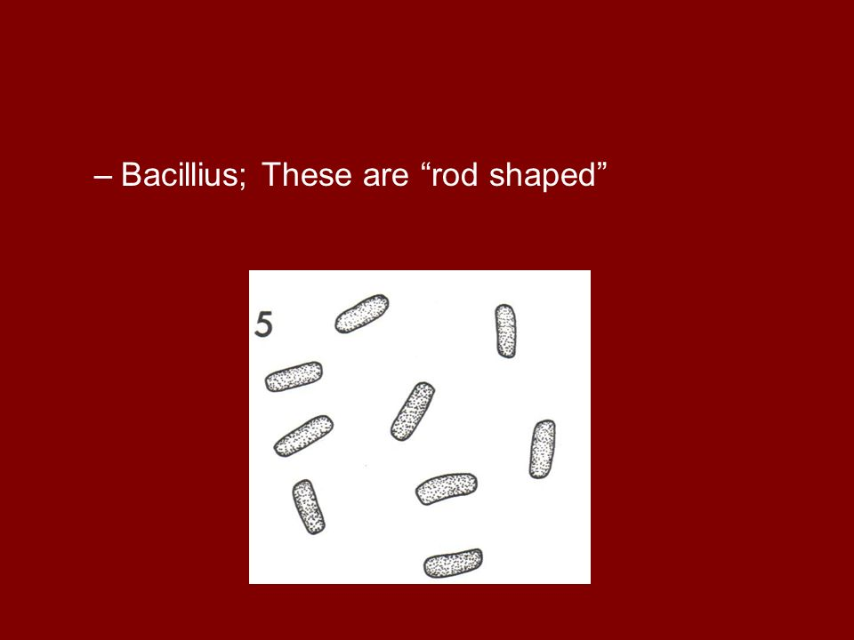 –Bacillius; These are rod shaped