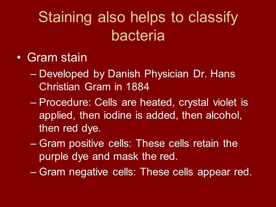 Staining also helps to classify bacteria Gram stain –Developed by Danish Physician Dr. Hans Christian Gram in 1884 –Procedure: Cells are heated, cryst