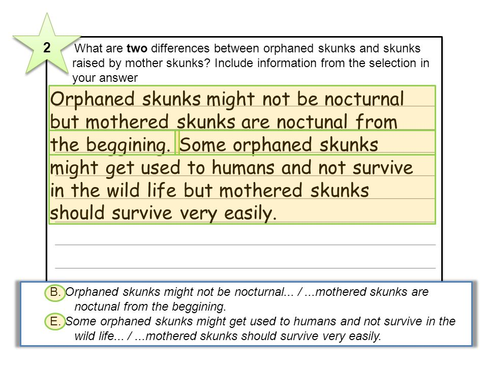 2 What are two differences between orphaned skunks and skunks raised by mother skunks? Include information from the selection in your answer Orphaned