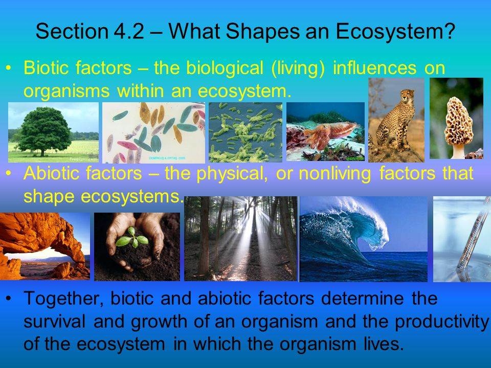 Section 4.2 – What Shapes an Ecosystem? Biotic factors – the biological (living) influences on organisms within an ecosystem. Abiotic factors – the ph