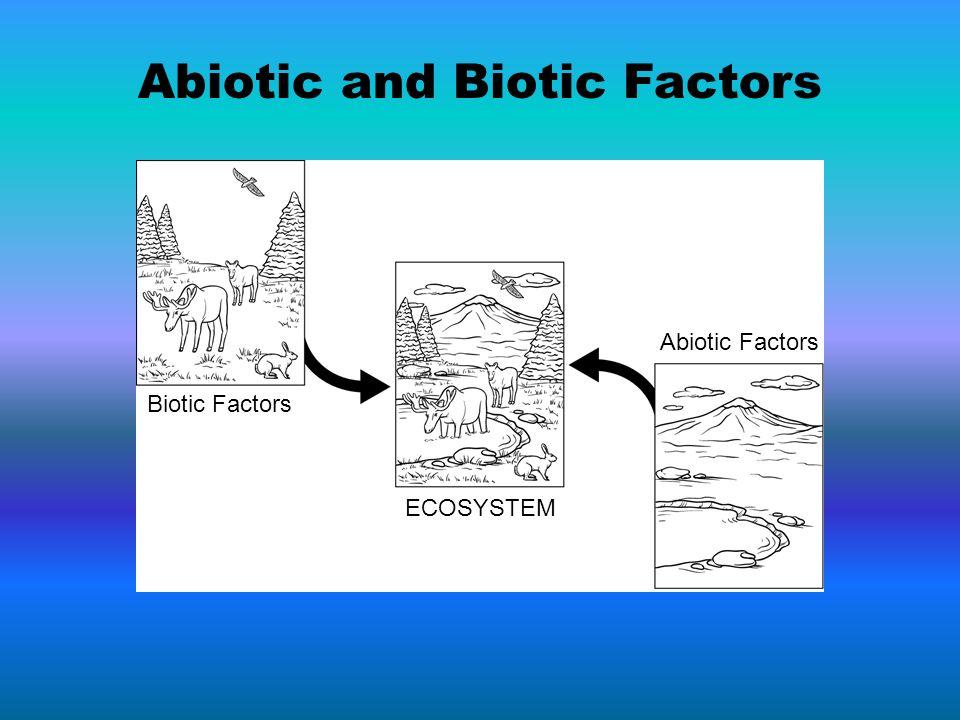 Biotic Factors ECOSYSTEM Abiotic Factors Abiotic and Biotic Factors