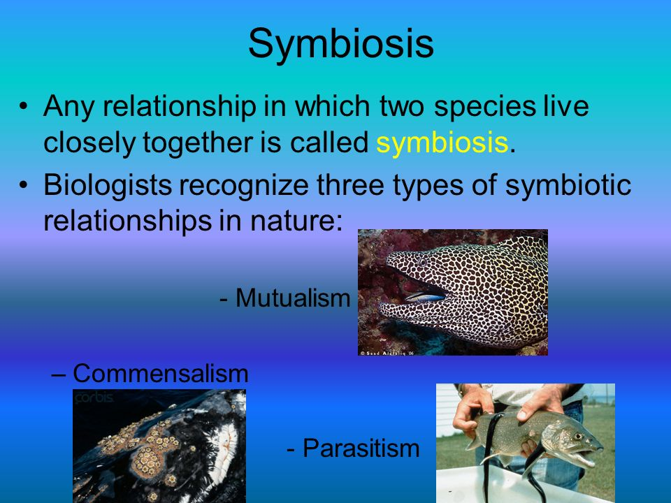Symbiosis Any relationship in which two species live closely together is called symbiosis. Biologists recognize three types of symbiotic relationships