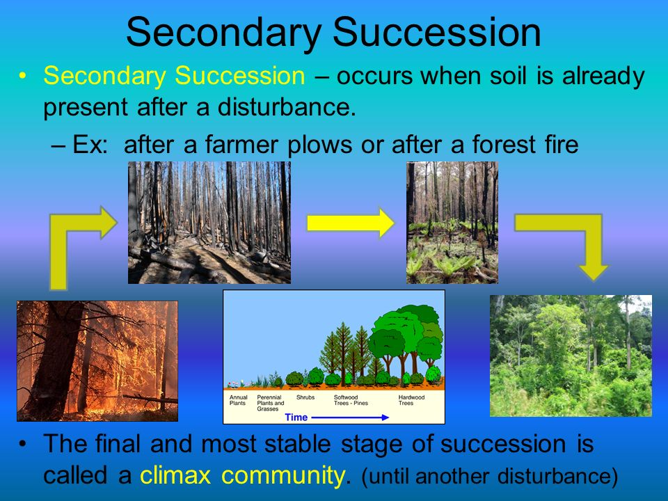 Secondary Succession Secondary Succession – occurs when soil is already present after a disturbance. –Ex: after a farmer plows or after a forest fire