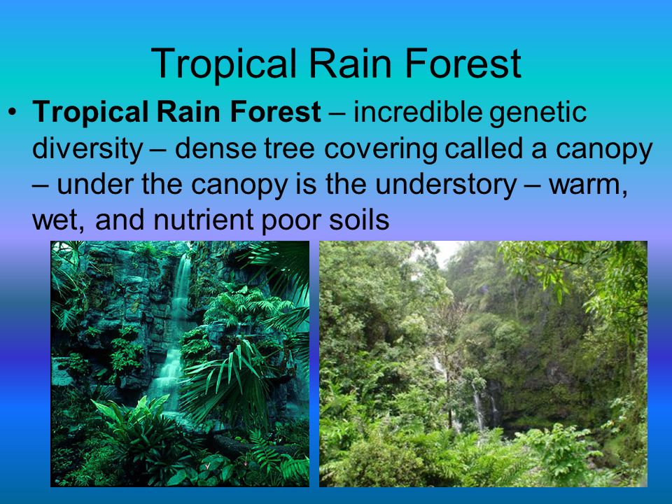 Tropical Rain Forest Tropical Rain Forest – incredible genetic diversity – dense tree covering called a canopy – under the canopy is the understory –