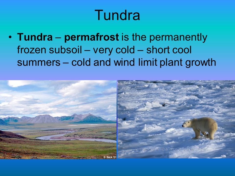 Tundra Tundra – permafrost is the permanently frozen subsoil – very cold – short cool summers – cold and wind limit plant growth