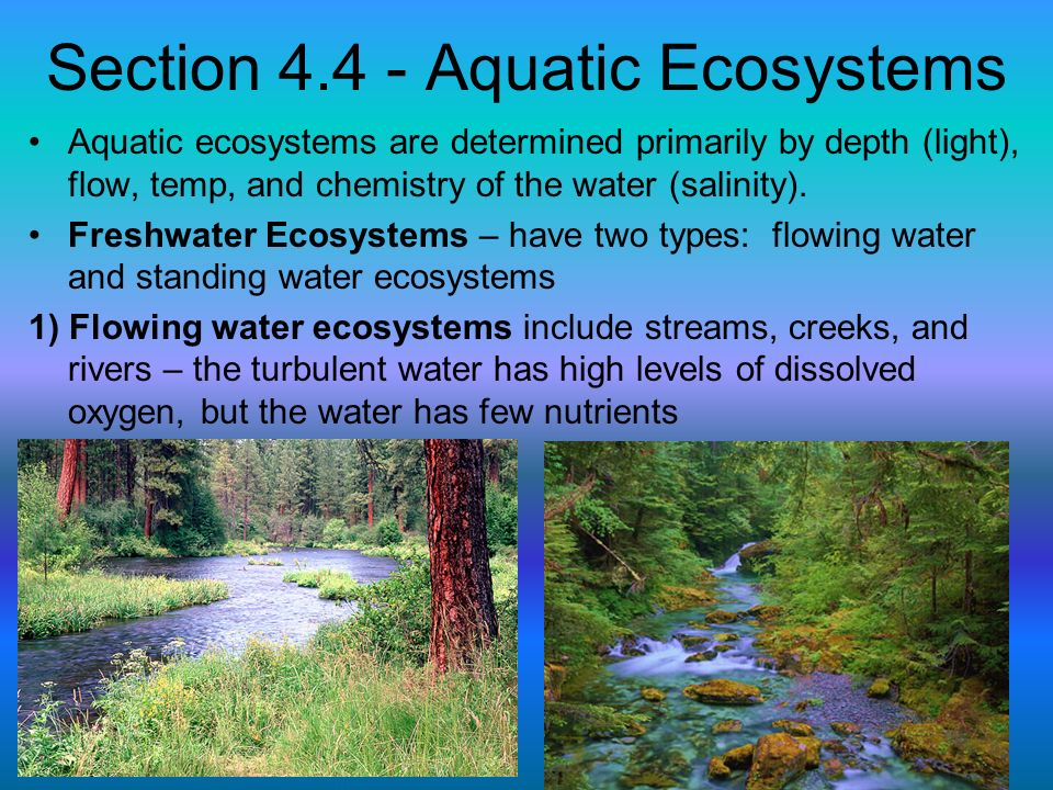 Section 4.4 - Aquatic Ecosystems Aquatic ecosystems are determined primarily by depth (light), flow, temp, and chemistry of the water (salinity). Fres