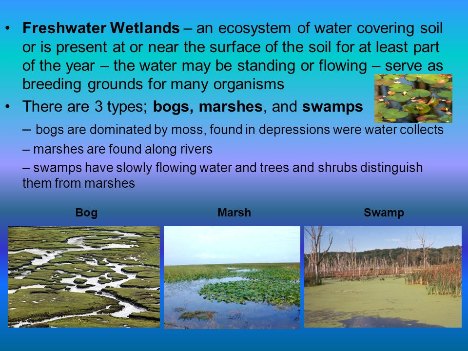 Freshwater Wetlands – an ecosystem of water covering soil or is present at or near the surface of the soil for at least part of the year – the water m