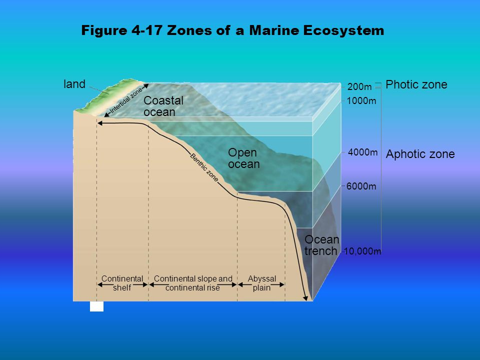 land Coastal ocean Open ocean Ocean trench Aphotic zone Photic zone Continental shelf Continental slope and continental rise Abyssal plain 200m 1000m