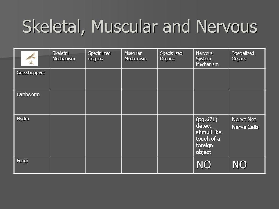 SkeletalMechanism (pg.