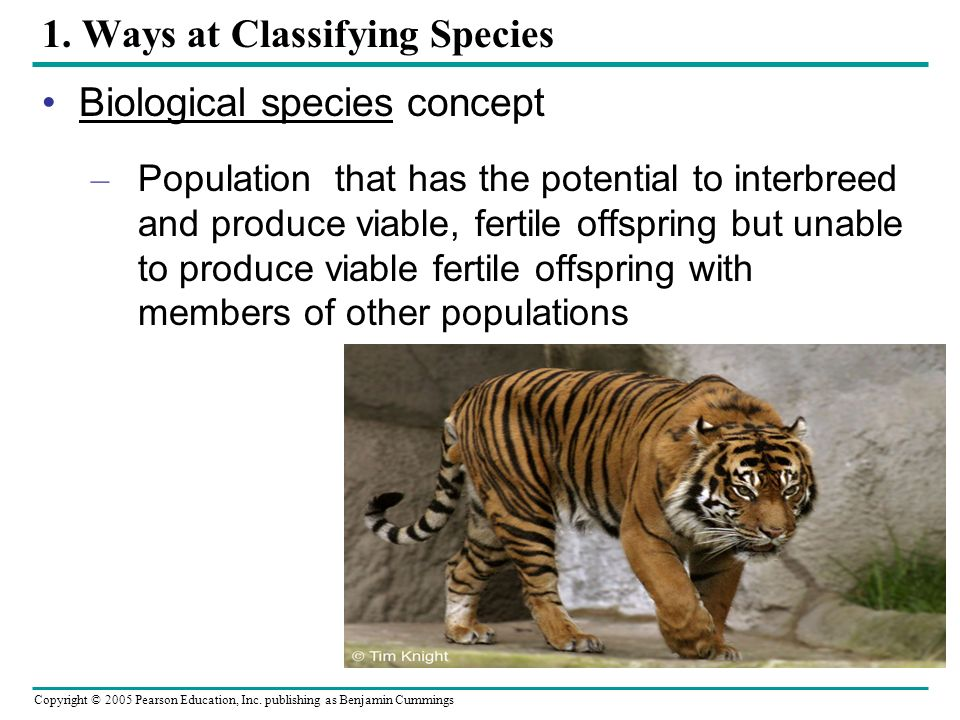 Copyright © 2005 Pearson Education, Inc. publishing as Benjamin Cummings 1. Ways at Classifying Species Biological species concept – Population that h