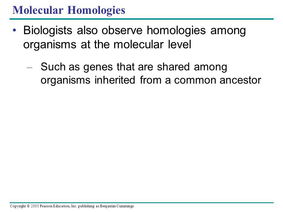 Copyright © 2005 Pearson Education, Inc. publishing as Benjamin Cummings Molecular Homologies Biologists also observe homologies among organisms at th