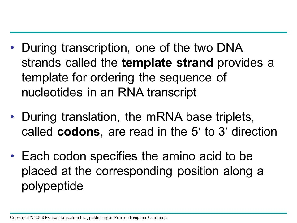 During transcription, one of the two DNA strands called the template strand provides a template for ordering the sequence of nucleotides in an RNA tra
