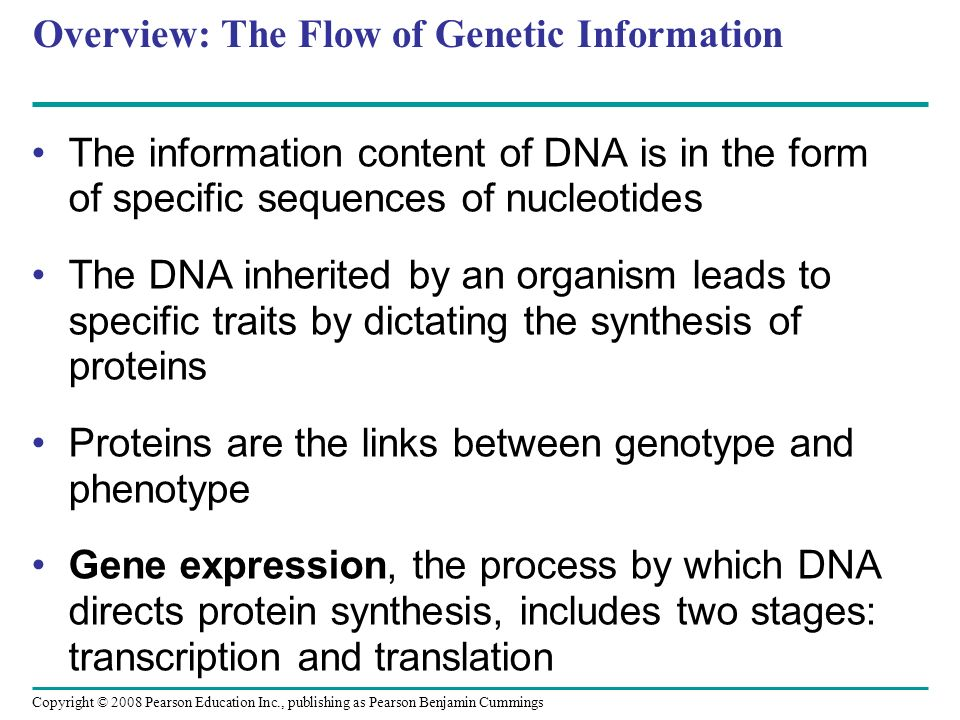 Overview: The Flow of Genetic Information The information content of DNA is in the form of specific sequences of nucleotides The DNA inherited by an o