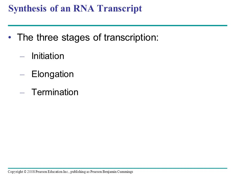 Synthesis of an RNA Transcript The three stages of transcription: – Initiation – Elongation – Termination Copyright © 2008 Pearson Education Inc., pub