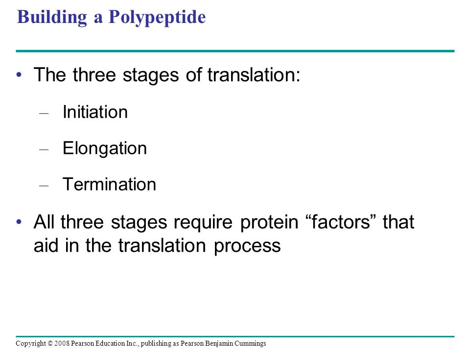 Building a Polypeptide The three stages of translation: – Initiation – Elongation – Termination All three stages require protein factors that aid in t