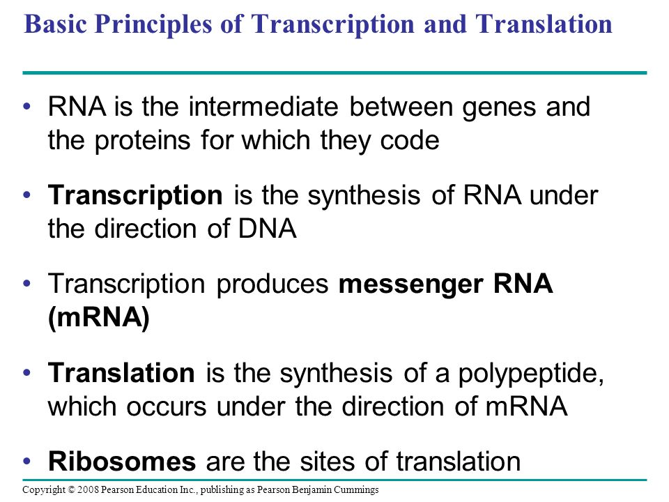 Basic Principles of Transcription and Translation RNA is the intermediate between genes and the proteins for which they code Transcription is the synt