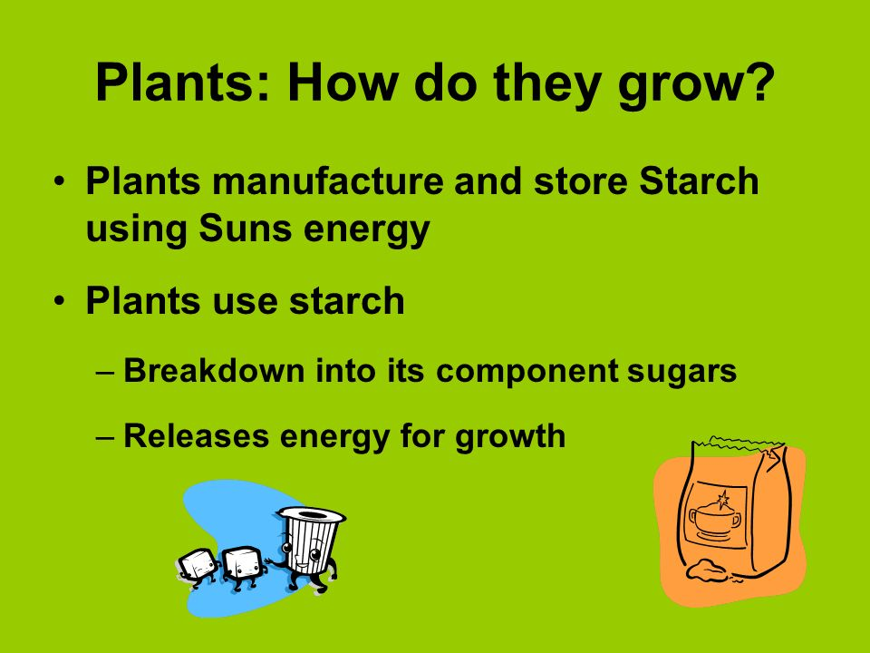 Plants: How do they grow? Plants manufacture and store Starch using Suns energy Plants use starch –Breakdown into its component sugars –Releases energ